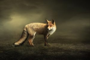 4. Marijke de Haze - The fox
